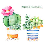 Watercolor handpainted succulent plant in pot and pebble stone Stock Images