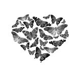 Watercolor heart filled with bright transparent butterflies of black and white   Royalty Free Stock Image