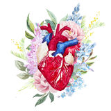 Watercolor heart with flowers Stock Images