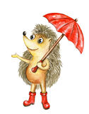 Watercolor hedgehog with red umbrella Royalty Free Stock Image