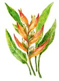 Watercolor heliconia bouquet exotic leaves and flowers isolated on white background vector illustration