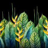 Watercolor heliconia design Royalty Free Stock Photography