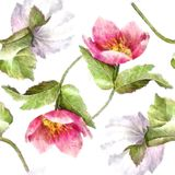 Watercolor Hellebore Flower Seamless Pattern On White Background Pastel Green Pink Purple Stock Image