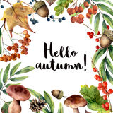 Watercolor Hello autumn frame. Hand painted floral frame with rowan, mushrooms, berries,acorn, pine cone, fall leaves Stock Images