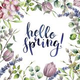 Watercolor Hello spring floral card. Hand painted illustration with eucalyptus leaves, apple blossom, tulip, willow Royalty Free Stock Photo