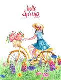 Watercolor spring and summer illustration with girl riding on bicycle in meadow with grass and wildflowers. vector illustration