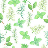 Watercolor herb spices seamless pattern. Watercolor herb  spices seamless pattern on white background Stock Images