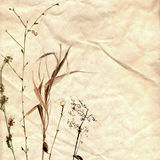 Watercolor herbarium hand drawn on the old paper Royalty Free Stock Photo