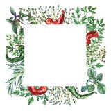 Watercolor herbs and spices frame. Stock Images