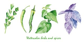 Watercolor herbs and spices. Hand painted realistic illustration vector illustration