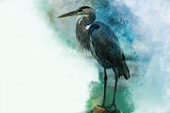 Watercolor Heron. Hand drawn watercolor heron stock illustration