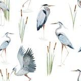 Watercolor Heron Pattern Stock Image