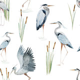 Watercolor heron pattern Stock Image