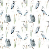 Watercolor heron pattern Royalty Free Stock Images