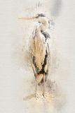 Watercolor heron Stock Photography