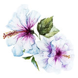 Watercolor hibiscus flower Royalty Free Stock Photo