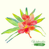 Watercolor hibiscus flower and palm leaf bouquet Stock Photos