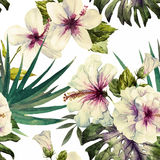Watercolor hibiscus patterns Royalty Free Stock Image