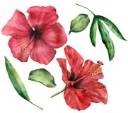 Watercolor hibiscus set. Hand painted red flowers and greenery leaves isolated on white background. Floral illustration royalty free illustration