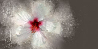 Watercolor hibiscus Stock Images