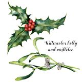 Watercolor holly and mistletoe set. Hand painted holly and mistletoe branch with red and white berry isolated on white Stock Photography