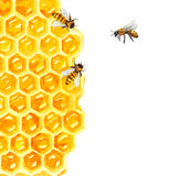 Watercolor Honeycomd and bee Royalty Free Stock Images