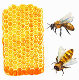 Watercolor Honeycomd and bee Royalty Free Stock Photo