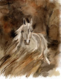 Watercolor horse Stock Image