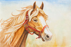 Watercolor horse head illustration Stock Photography