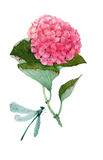 Watercolor hortensia  flower Royalty Free Stock Images