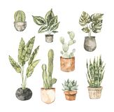 Watercolor house plant illustrations. Cactus, monstera, pipal, succulent, olive tree. Home decor botanic flowers. Greenery. Floral
