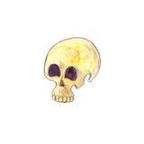 Watercolor human skull Royalty Free Stock Photos