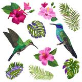 Watercolor Hummingbird, Hibisсus Flowers and Tropical Palm Leaves. Hand Drawn Exotic Colibri Birds and Floral Elements vector illustration