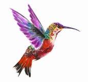 watercolor hummingbird. Stock Image
