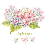 Watercolor hydrangea composition Royalty Free Stock Images