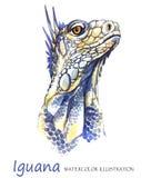 Watercolor Iguana στο άσπρο υπόβαθρο Εξωτικό ζώο Στοκ φωτογραφίες με δικαίωμα ελεύθερης χρήσης