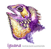 Watercolor Iguana στο άσπρο υπόβαθρο Εξωτικό ζώο Στοκ φωτογραφία με δικαίωμα ελεύθερης χρήσης