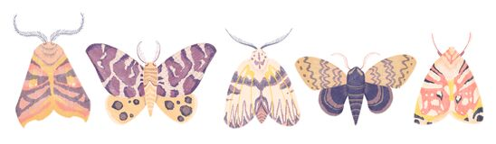 Watercolor illustartion with exotic butterflies, moths set isolated on white background. Perfect for you unique creation