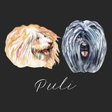 Watercolor Illustrated Portrait of Puli dog. Cute curly face of domestic dog. Watercolor Illustrated Portrait of Puli dog. Cute curly face of domestic dog royalty free illustration