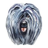 Watercolor Illustrated Portrait of Puli dog. Cute curly face of domestic dog. Watercolor Illustrated Portrait of Puli dog. Cute curly face of domestic dog vector illustration