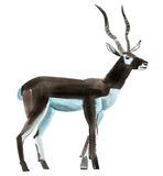 Watercolor illustration of antelope in white background. Royalty Free Stock Image