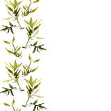 Watercolor illustration of bamboo plant Royalty Free Stock Photography