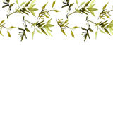 Watercolor illustration of bamboo plant Royalty Free Stock Images
