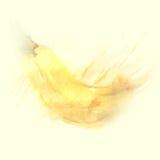 Watercolor illustration of banana Royalty Free Stock Image