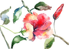 Watercolor illustration of Beautiful flowers Stock Photos