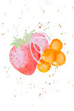 Watercolor illustration of berries. A watercolor illustration of different berries. Backgrounds and wallpapers for different purposes Royalty Free Stock Images