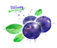 Watercolor illustration of bilberry Stock Photo