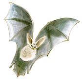 Watercolor illustration of a bat in white background. Stock Photography