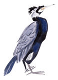 Watercolor illustration of a bird cormorant in white background. Stock Photography