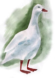 Watercolor illustration of a bird duck Royalty Free Stock Photography